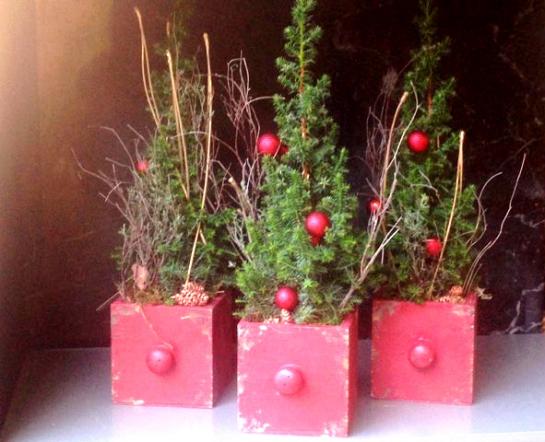 Die zuckerhutfichte als tannenbaum f r balkon und terrasse garten unterberg - Tannenbaum im topf kaufen ...