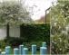 Pflanztip des Monats – Baum für kleine Gärten