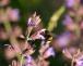 Insektenrückgang in Deutschland – Lebensräume schaffen