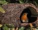 Vogelschutz im Winter: Nistkästen reinigen