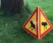 Der Unterschied zwischen gefährlichen Eichenprozessionsspinner und ungefährlichen Gespinstmotten