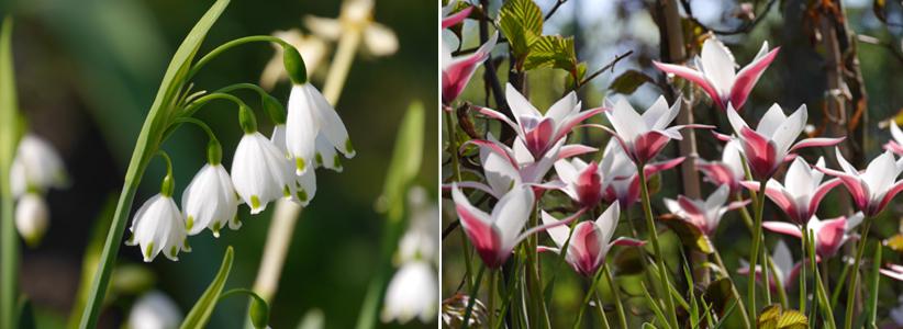 Außergewöhnliche Frühlingsblüher
